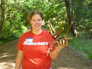 Amy holding her trophy blackberry root. Photo by Lori Ainsworth.