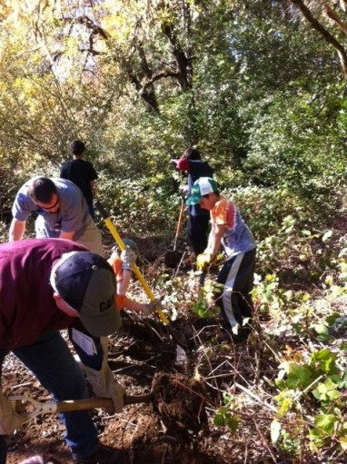 Teamwork is essential for removing invasive species in the riparian area.