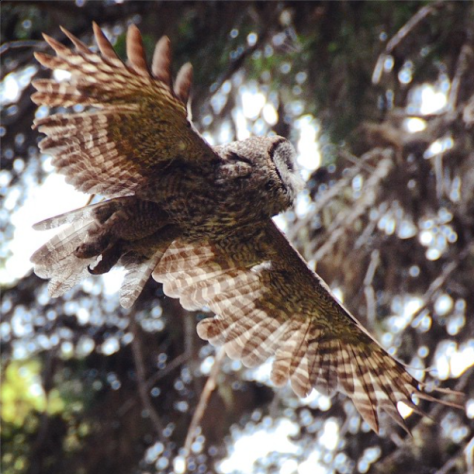 owlstagram