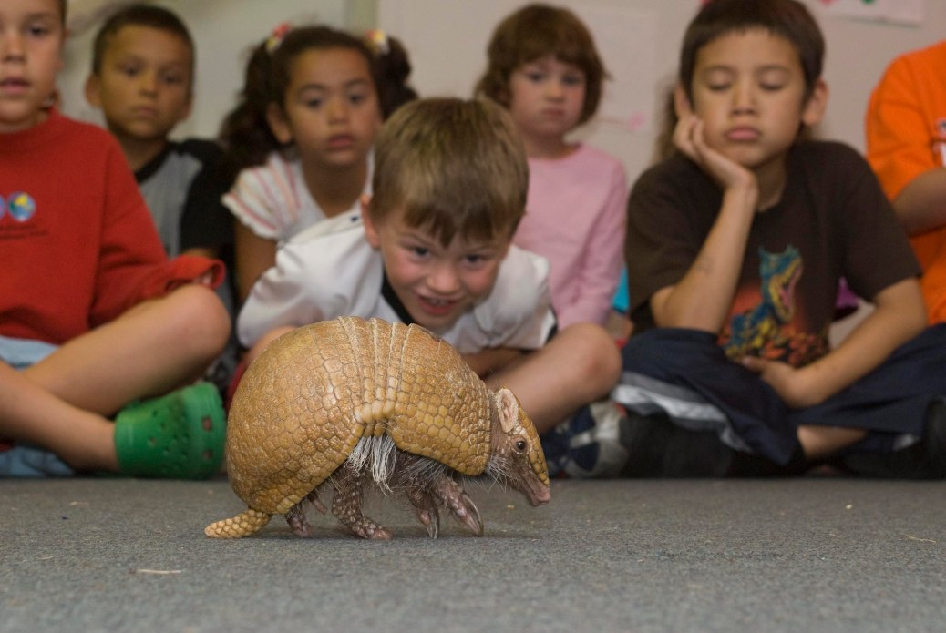 First graders take a look at a python skin during armadillo during a school presentation by the Oregon Zoo.