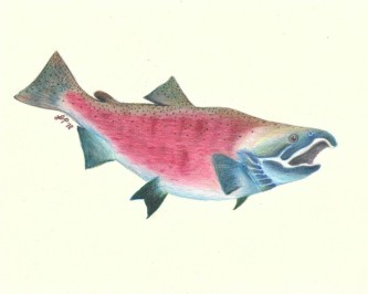 lauren fish