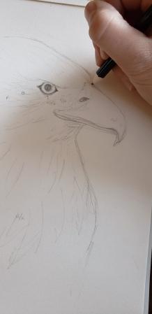 luaren eagle